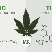 Whats the difference between CBD vs THC?