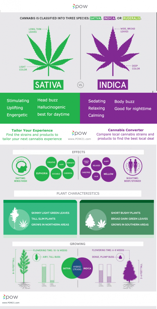 Differences of sativa vs. indica in cannabis strains